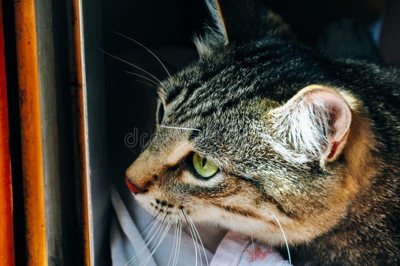 Porträt einer Katze, die heraus das Fenster schaut stockbild