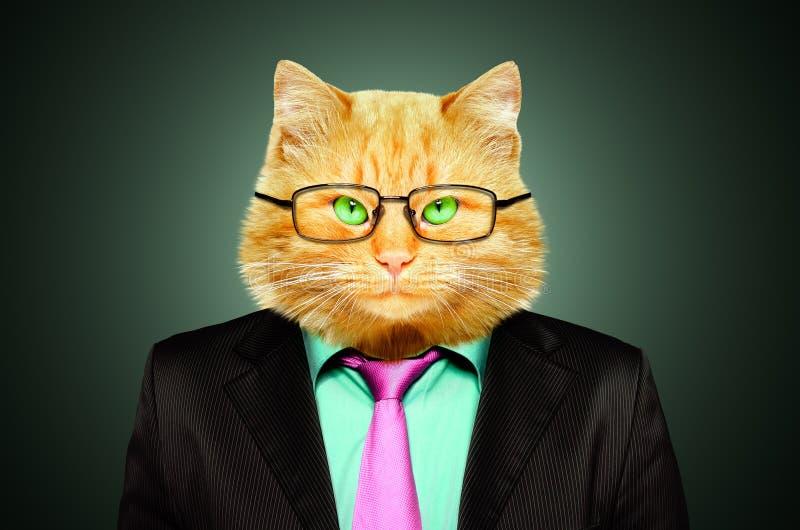 Porträt einer Katze in einem den Anzug und Gläsern stockbilder