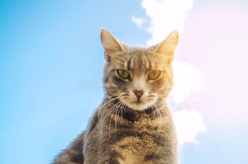 Katze Im Himmel