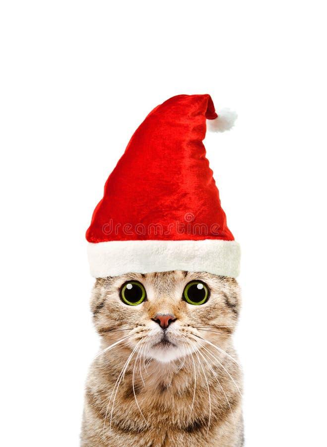 Porträt einer schönen Katze schottisch gerade in einer neues Jahr ` s Kappe stockbild
