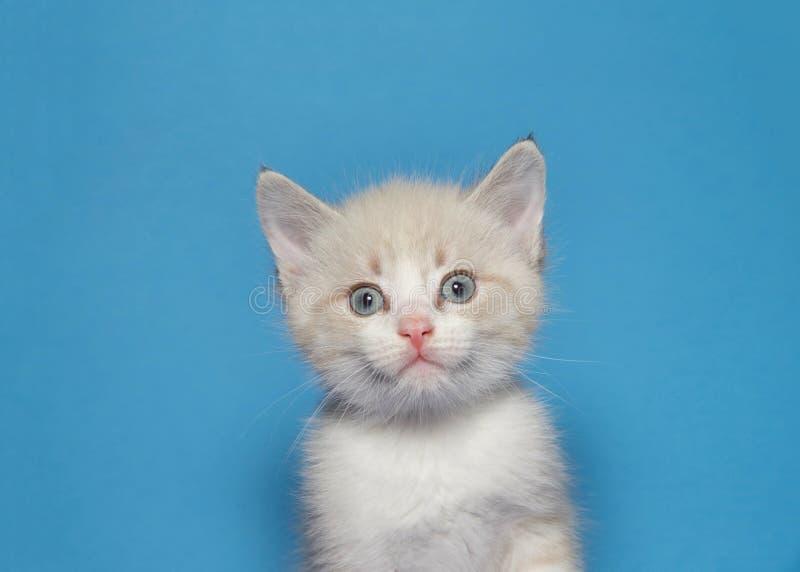 Porträt eines cremefarbenen Kätzchens der getigerten Katze mit überraschtem Ausdruck lizenzfreies stockfoto