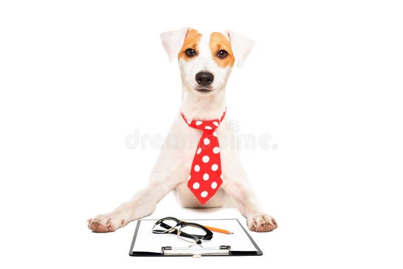 Porträt eines Geschäftshundes lizenzfreies stockfoto