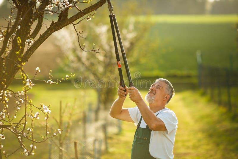Porträt eines hübschen älteren Mannes, der in seinem Garten im Garten arbeitet lizenzfreie stockfotos