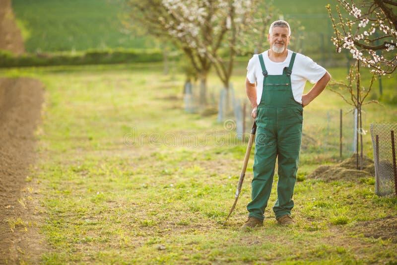 Porträt eines hübschen älteren Mannes, der in seinem Garten im Garten arbeitet stockbild