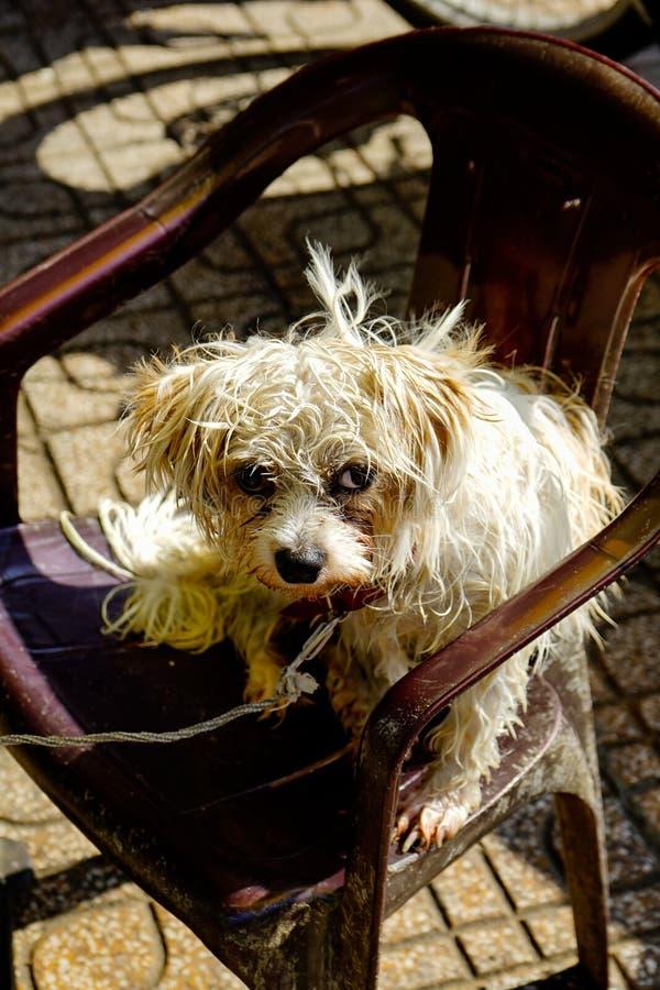 Porträt eines Hundes sitzen auf dem Stuhl stockbild