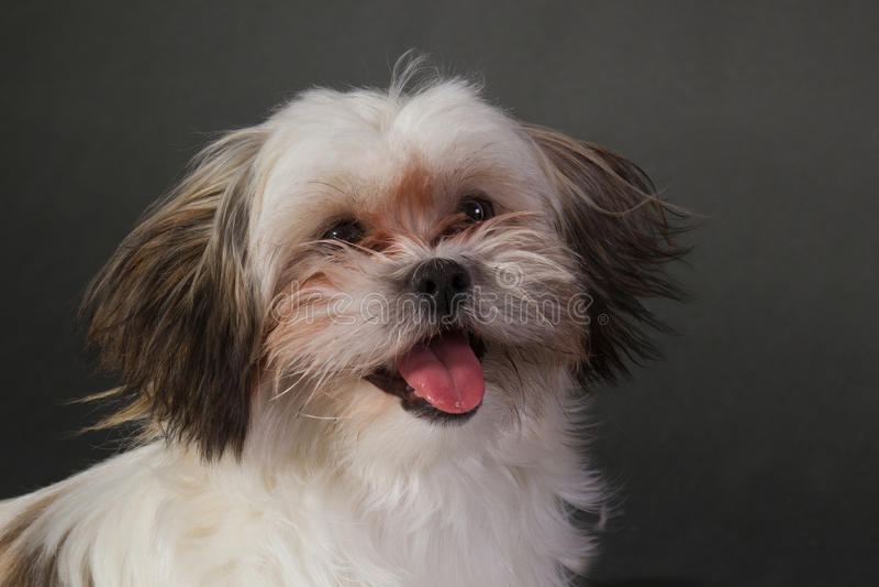 Porträt eines jungen Hundes auf einem dunklen Hintergrund lizenzfreie stockfotografie