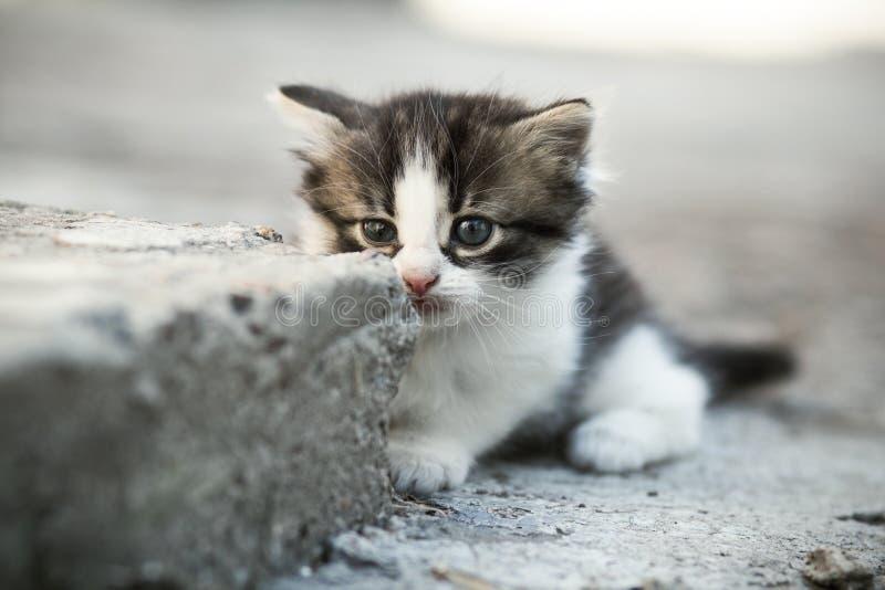 Porträt eines kleinen einzigen neugeborenen erschrockenen Kätzchens auf einem konkreten Boden im Yard stockbilder