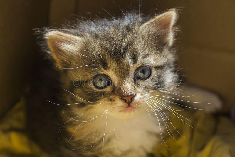 Porträt eines kleinen Kätzchens lizenzfreies stockfoto