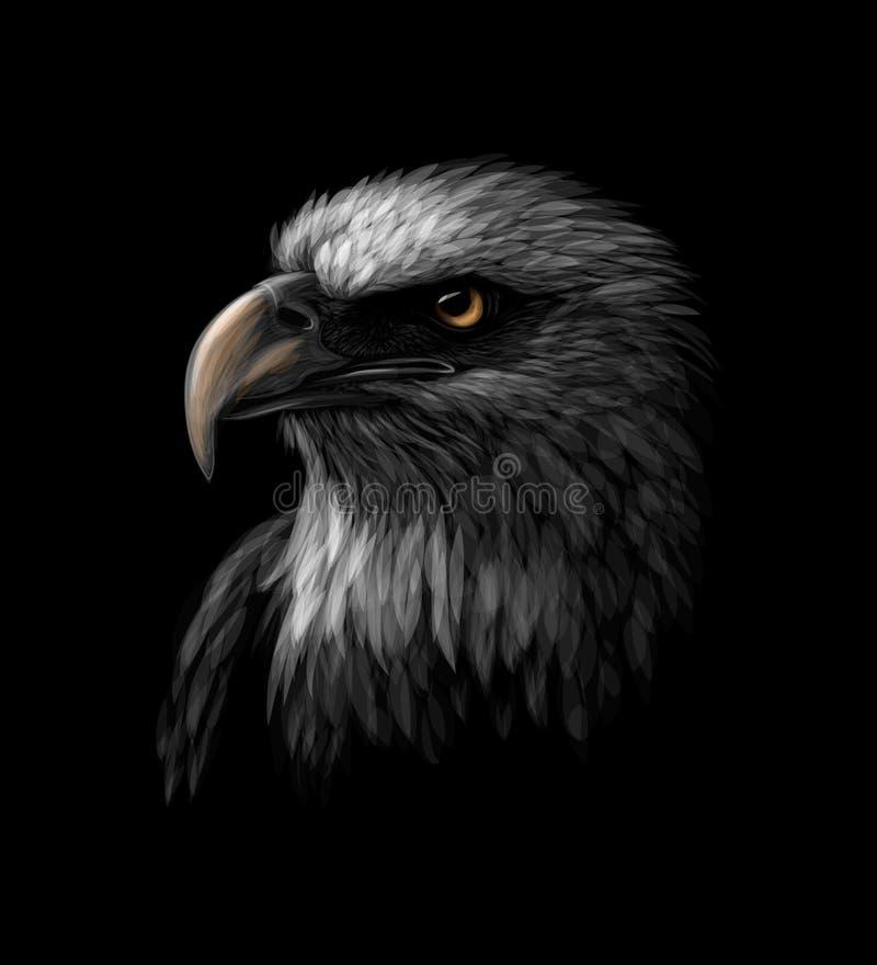 Porträt eines Kopfes eines Weißkopfseeadlers auf einem schwarzen Hintergrund vektor abbildung