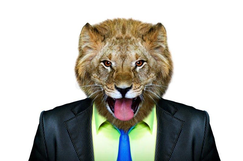 Porträt eines Löwes in einem Anzug lizenzfreie stockfotos