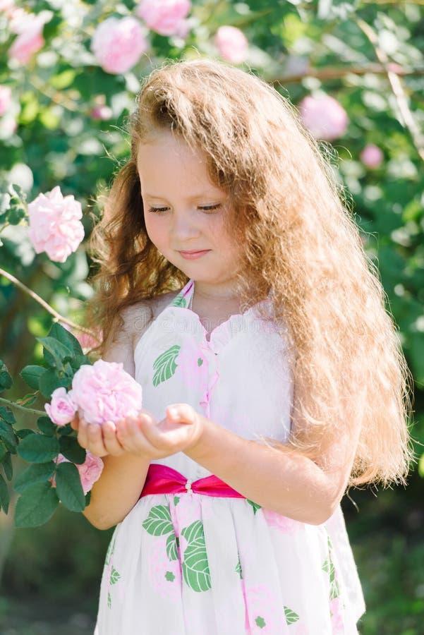 Porträt eines netten Kleinkindmädchens im Freien im Garten, der die rosa Rosen riecht lizenzfreies stockbild