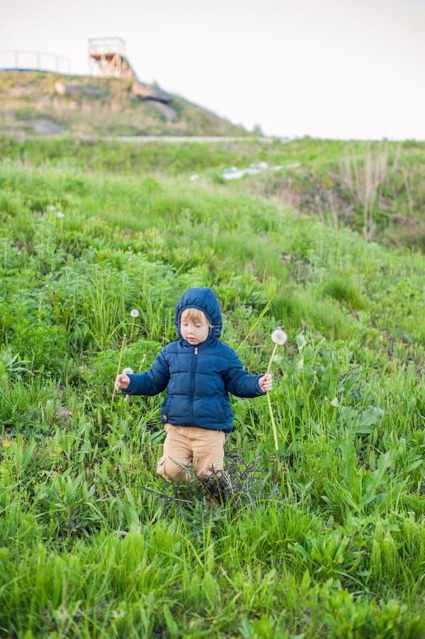 Porträt eines netten lustigen Kleinkindes des kleinen Jungen, das in der Waldfeldwiese mit Löwenzahn steht, blüht in den Händen u stockfoto