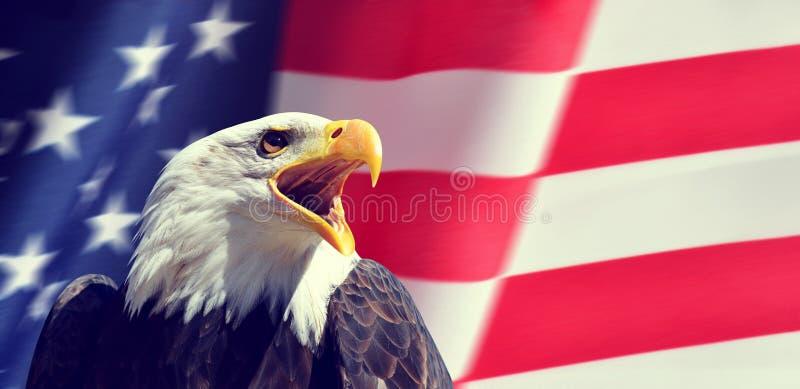 Porträt eines nordamerikanischen kahlen Eagle Haliaeetus-leucocephalus in der Hintergrund USA-Flagge lizenzfreie stockfotografie