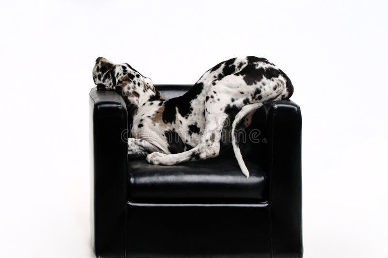 Porträt eines schönen Hundes auf einem weißen Hintergrund lizenzfreies stockfoto