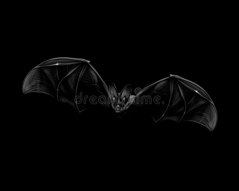Porträt eines Schlägers im Flug auf einem schwarzen Hintergrund Halloween vektor abbildung