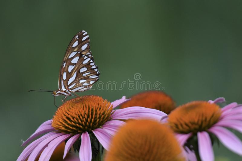 Porträt eines Schmetterlinges stockfotos