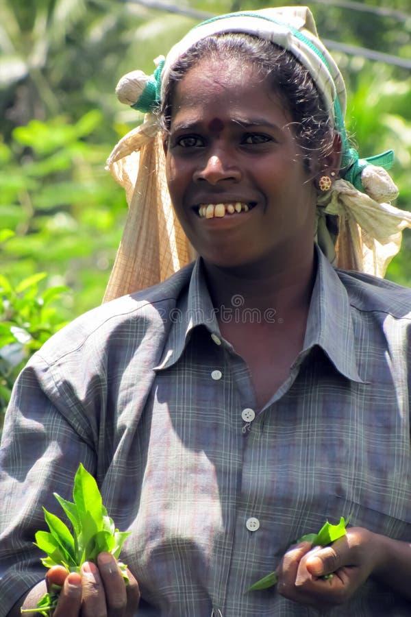Porträt eines Tamilmädchens, das Tee auf Plantagen auswählt lizenzfreies stockbild