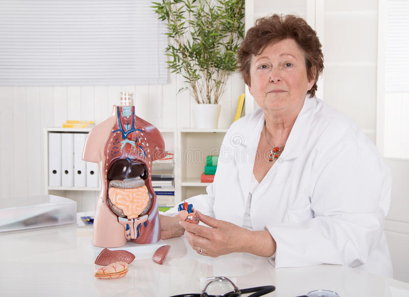 Porträt glücklichen älteren älteren Doktors, der den menschlichen Körper erklärt stockbilder