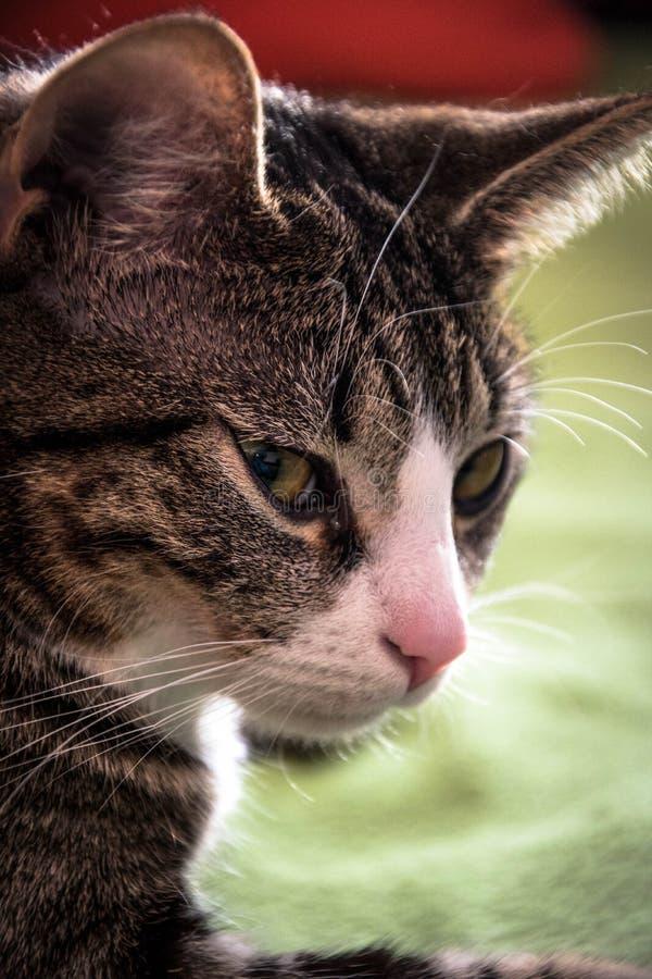 Porträt meiner Katze stockbilder