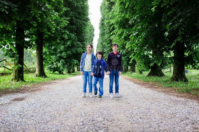 Porträt mit drei Brüdern in einer Baum gezeichneten Allee lizenzfreie stockfotos