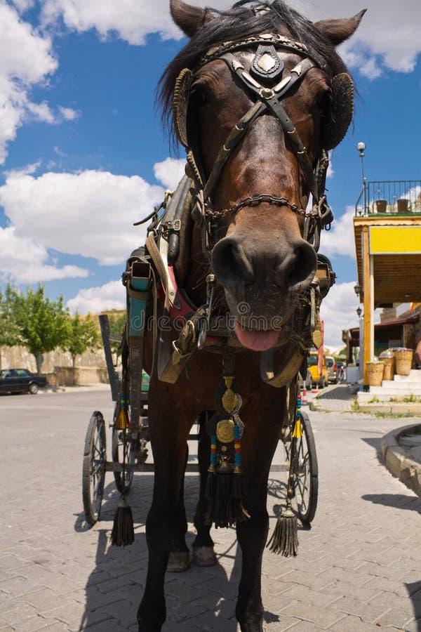Porträt nah oben vom netten dunkelbraunen Pferd, das schleppenden Wagenlastwagen der Kamera betrachtet stockfotos