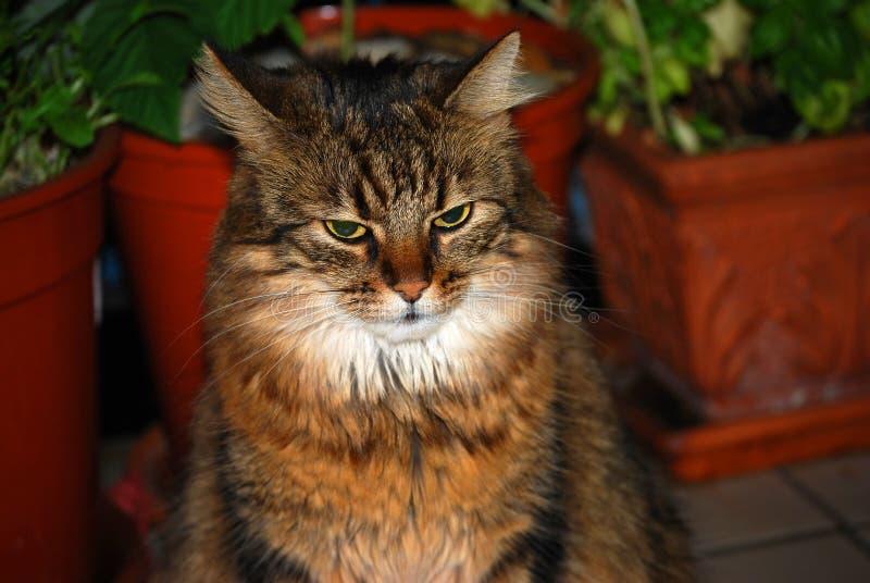 Porträt von einer Katze lizenzfreie stockfotos