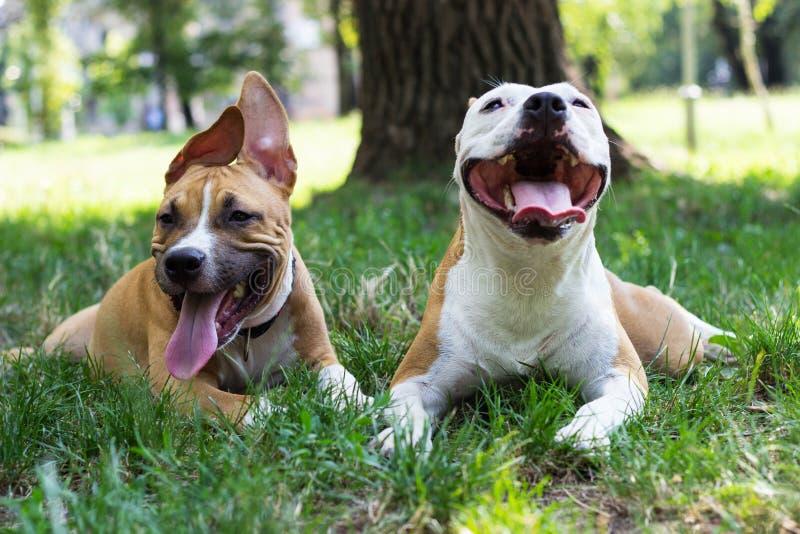 Porträt von zwei glücklichen Hunden im Park stockfotos