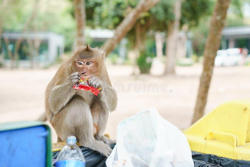 Porträtbild des Affen Süßigkeit essend der Behälter in der natürlichen Umwelt Affe ist lustig und glücklich und genießt zu essen lizenzfreie stockbilder