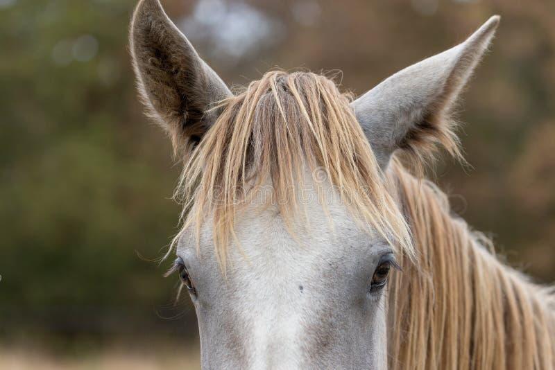 Porträtt av tamhästar i en skugga arkivbilder