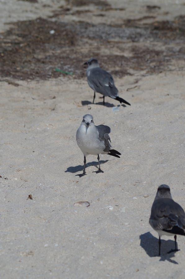 Porträttmålaren: en seagull royaltyfri bild