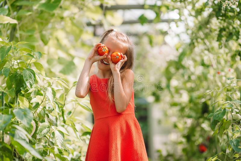 Portr?t des Kindes mit der gro?en Tomate in den H?nden im Gew?chshaus lizenzfreie stockfotografie