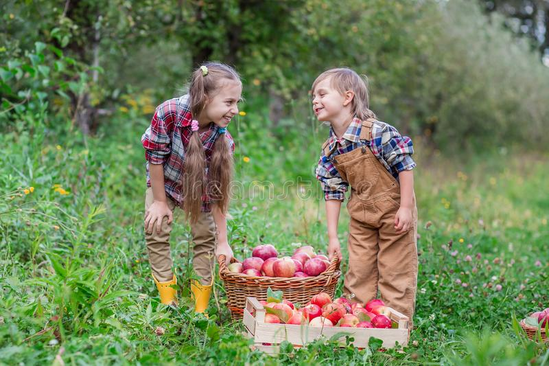 Portr?t eines Bruders und der Schwester im Garten mit roten ?pfeln in ihren H?nden stockfotos