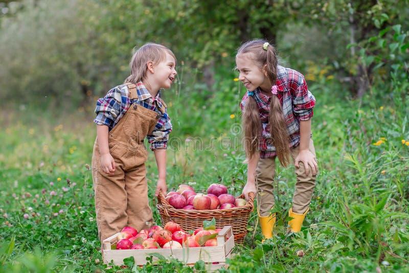 Portr?t eines Bruders und der Schwester im Garten mit roten ?pfeln in ihren H?nden lizenzfreie stockbilder