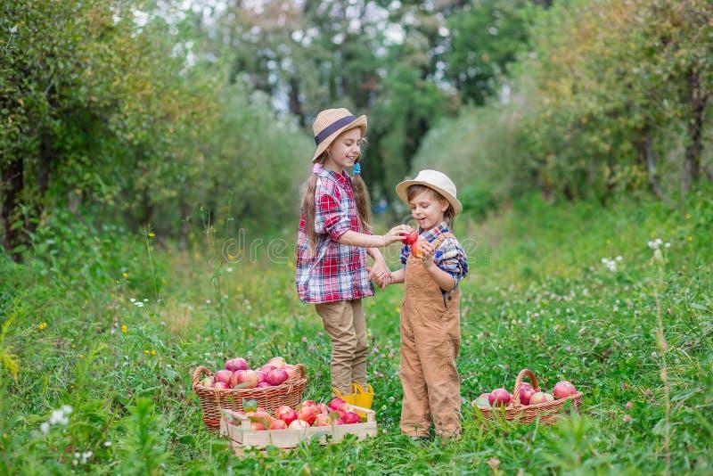 Portr?t eines Bruders und der Schwester im Garten mit roten ?pfeln in ihren H?nden lizenzfreies stockbild