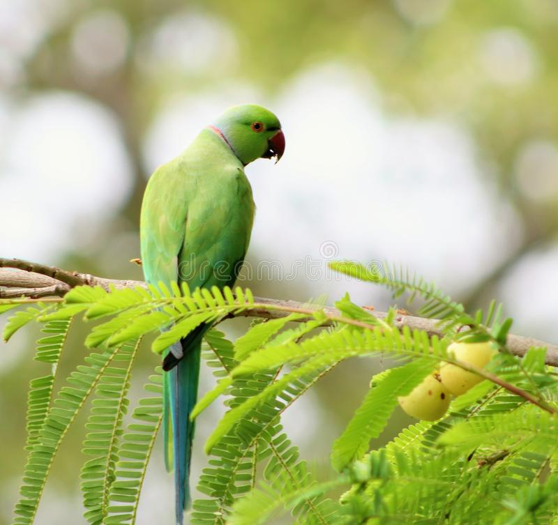 Portr?t eines Papageien stockbilder