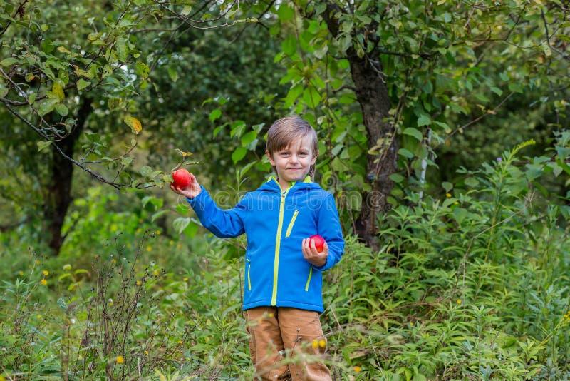 Portr?t von einem netten Jungen in einem Hut im Garten mit einem roten Apfel, Gef?hle, Gl?ck, Nahrung Herbsternte von ?pfeln stockbild