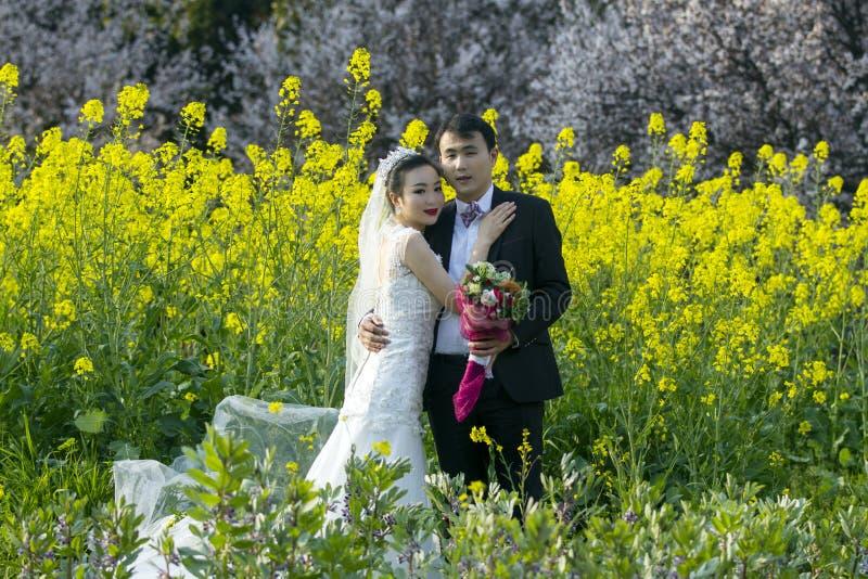 Portraint chinês do casamento dos pares no campo de flor do cole fotos de stock royalty free