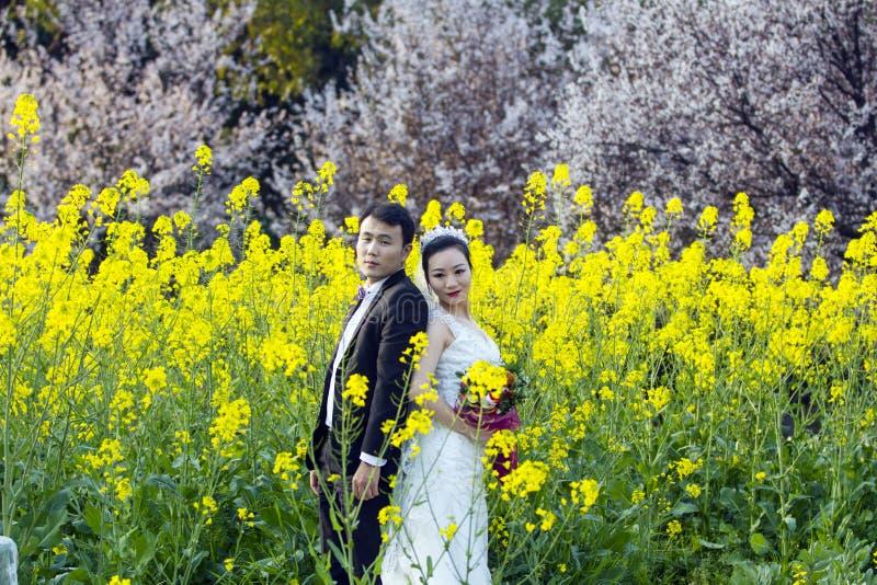 Portraint chinês do casamento dos pares no campo de flor do cole imagem de stock