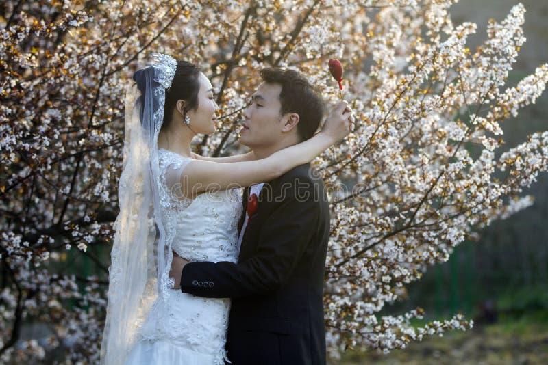 Portraint cinese di nozze delle coppie davanti ai fiori di ciliegia immagine stock