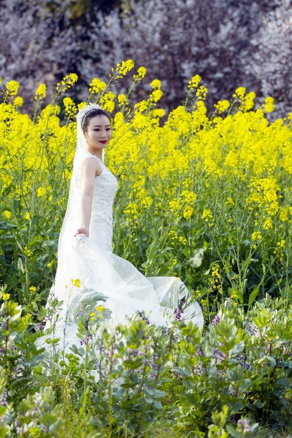 Portraint da noiva com o vestido de casamento branco no campo de flor do cole imagem de stock royalty free