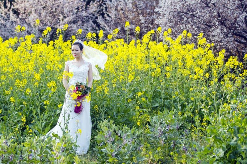 Portraint da noiva com o vestido de casamento branco no campo de flor do cole imagem de stock