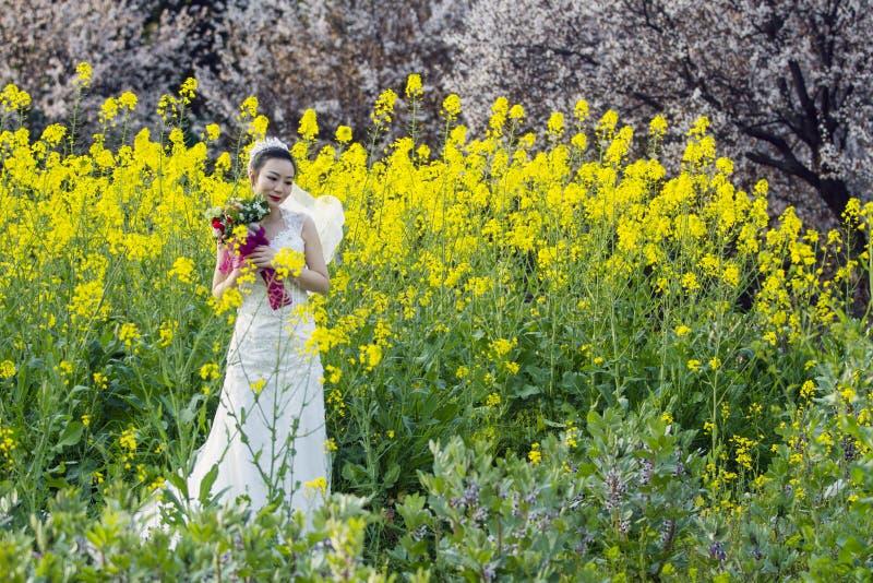 Portraint da noiva com o vestido de casamento branco no campo de flor do cole fotografia de stock