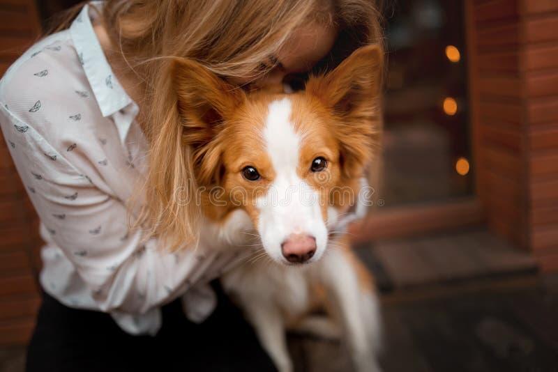 Portrair de chien rouge et blanc border collie mignon de caresse de fille photographie stock libre de droits