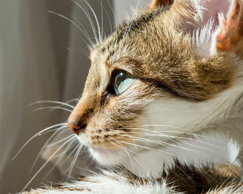 Portrait étroit de chat images libres de droits