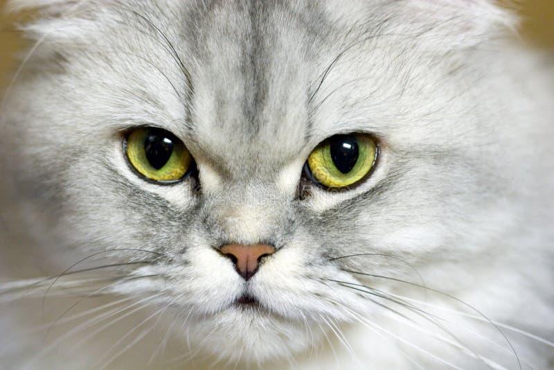 Download Portrait stock photo. Image of kitty, beautiful, green - 123288