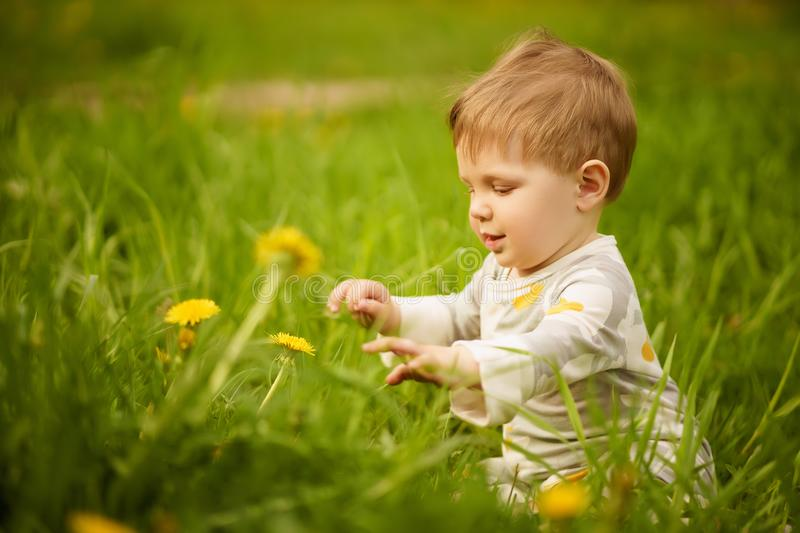 Portrait of adorable baby playing outdoor in the sunny dandelions field. Concept: family values. Portrait of adorable innocent funny brown-eyed baby playing stock photography