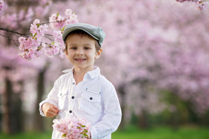 Portrait of adorable little boy in a cherry blossom tree garden, royalty free stock photo