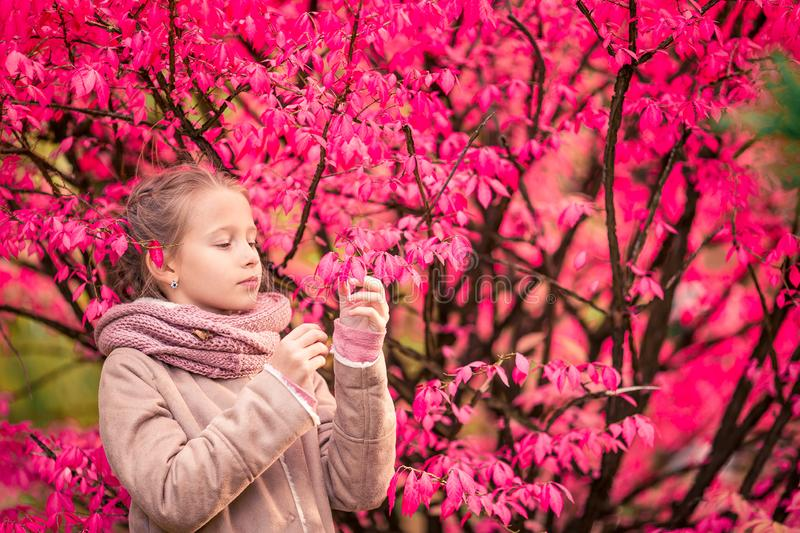 Adorable little girl at beautiful autumn day outdoors. Portrait of adorable little girl outdoors at beautiful autumn day outdoors with amazing pink tree royalty free stock photography