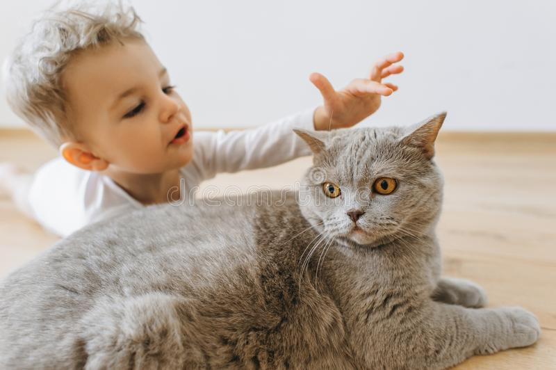 portrait of adorable toddler boy and grey british shorthair cat lying on floor together royalty free stock photography