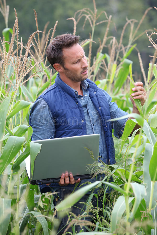 Portrait of agronomist. Agronomist analysing cereals with laptop computer stock image